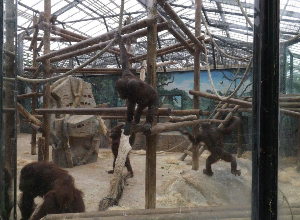 serre des grands singes Beauval